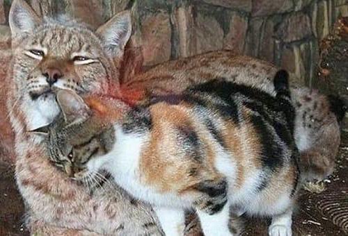 Картинки по запросу Бездомный кот пробрался в зоопарк и завел себе необычного друга