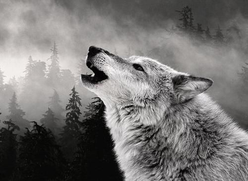 И зверя нет страшней, че…