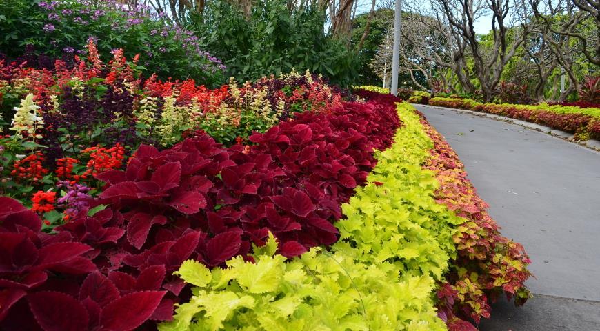 Колористические законы составления цветников