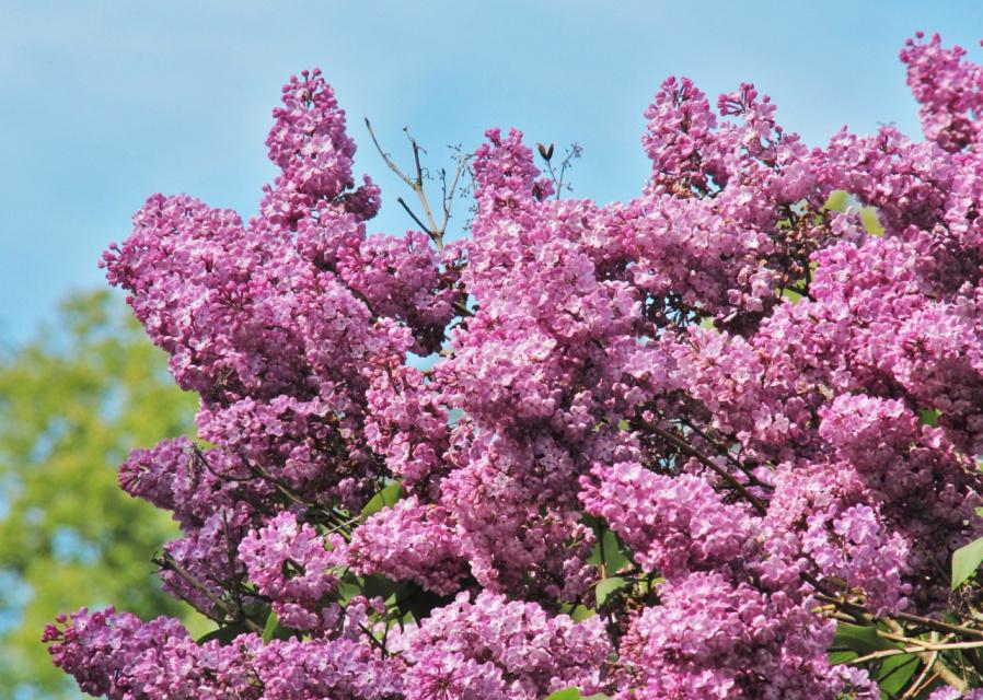 Жду весну ...