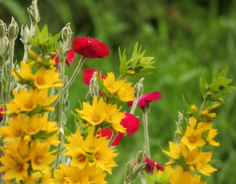 Цветики - цветочки, у меня в садочке...