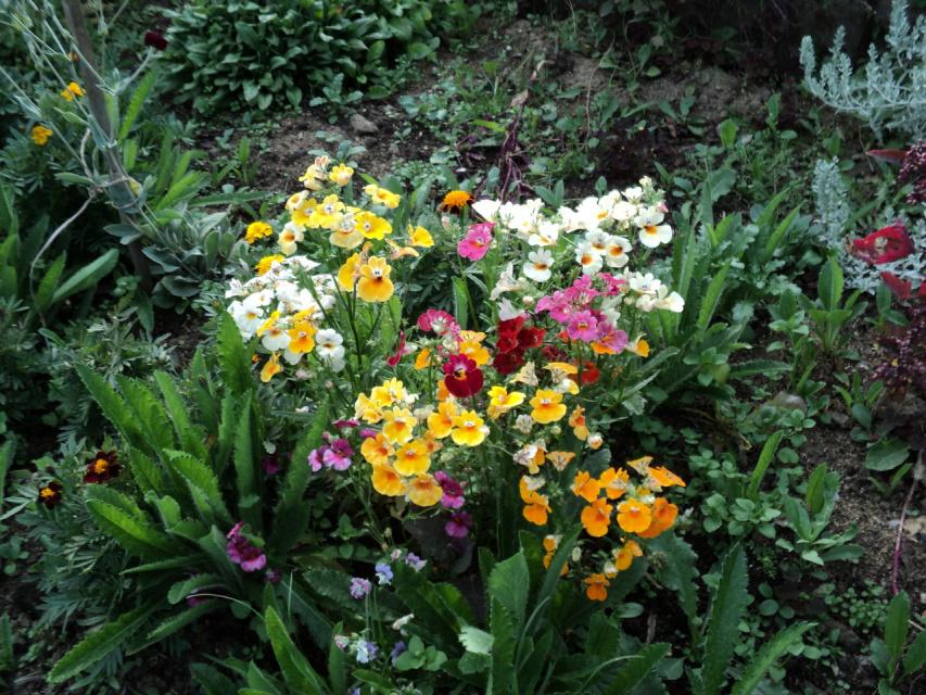Цветы в саду сибири фото