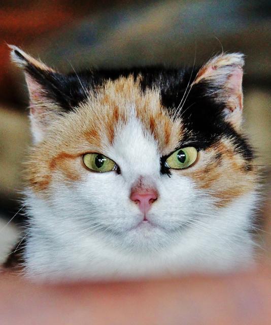 1 Марта , Международный день кошек ....