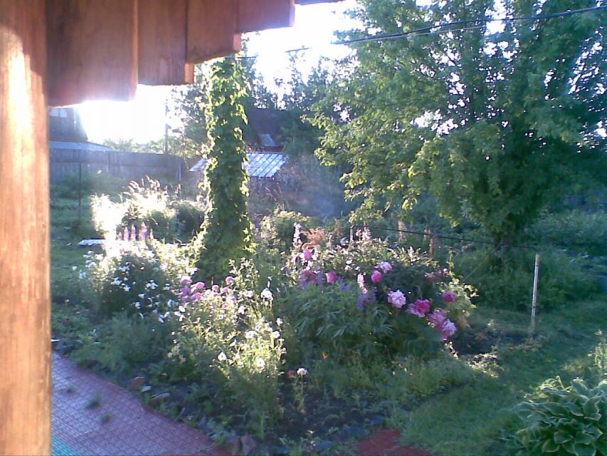 мой сад