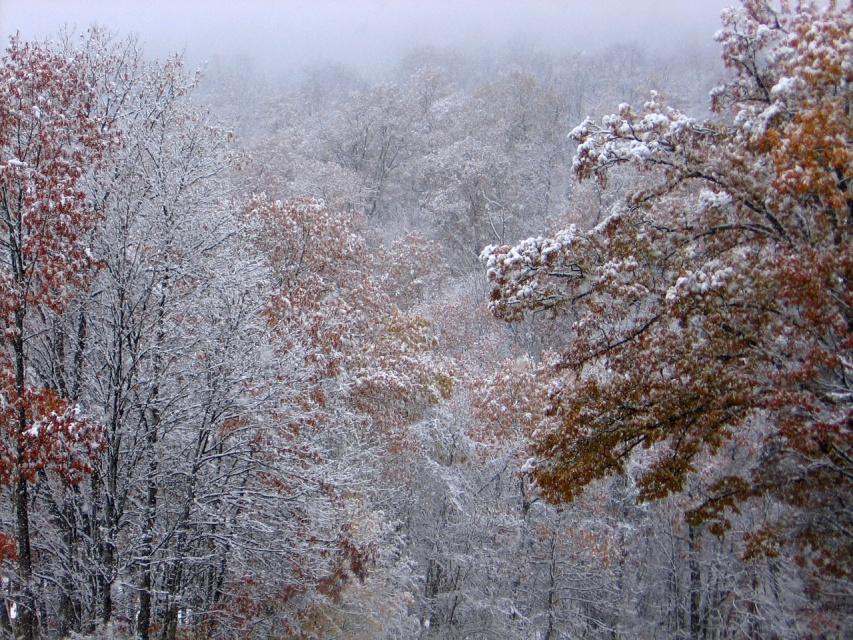 Первый снег нгедавно выпал....