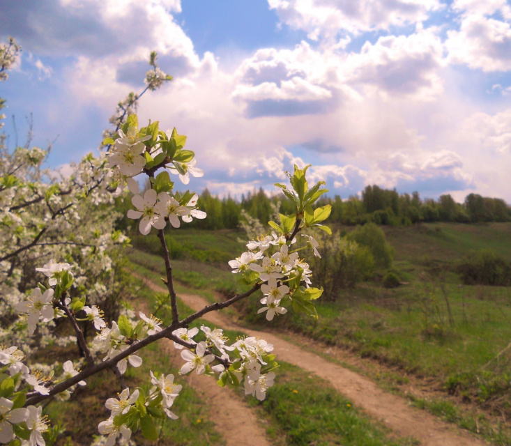 Цветущий май