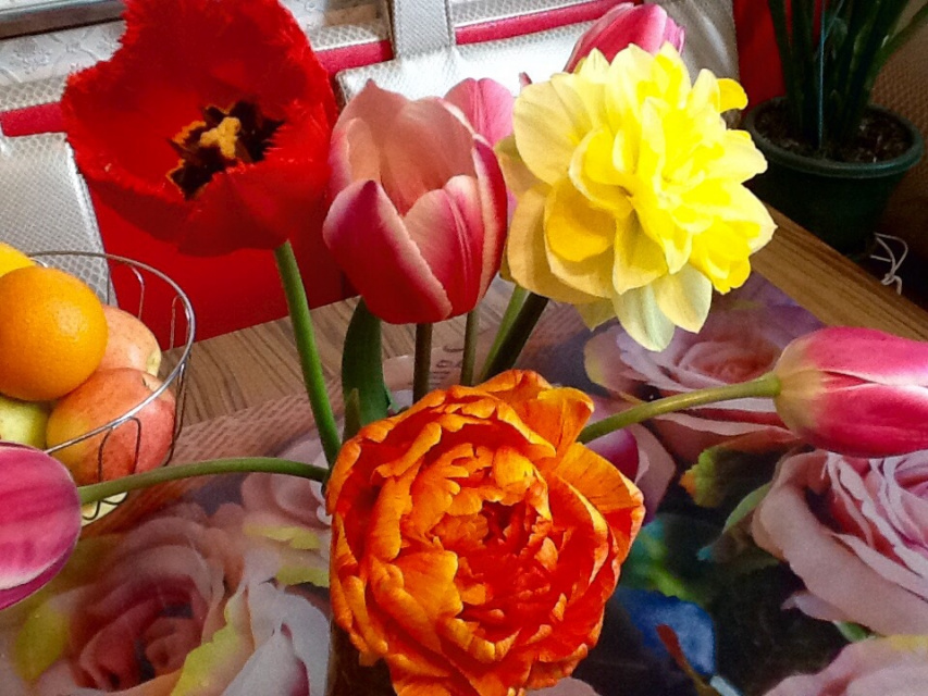 Мои тюльпаны.
