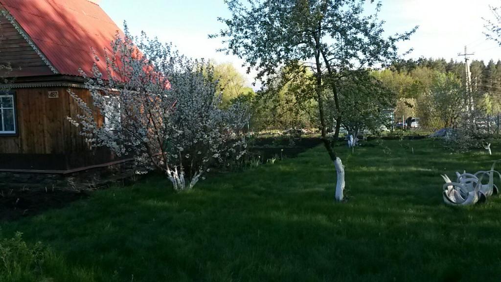Весенний сад - любимая пора!!!