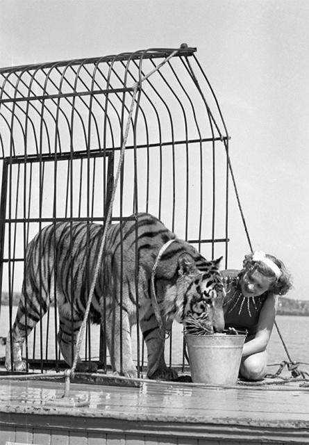 Укротительница Маргарита Назарова и тигр Пурш на палубе теплохода во время съёмок фильма «Полосатый рейс». 1956 год.