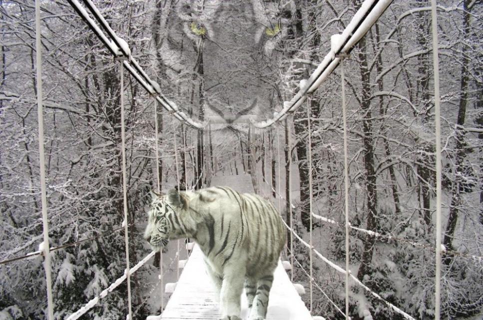 Год тигра все ближе