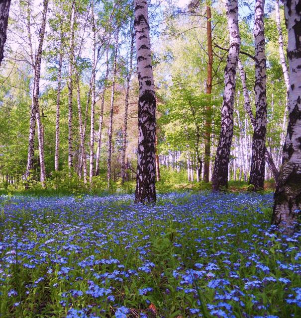 Голубоглазый май