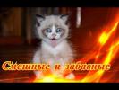 Приколы с кошками собаками Позитив Создай себе хорошее настроение