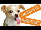 Новые смешные видео про животных|Cамые смешные коты кошки собаки| ЛУЧШИЕ ПРИКОЛЫ 2017|Новые серии HD