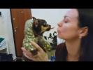 Приколы с котами и Видео Приколы с животными подборка 2018 Попугай   КОШКА и Енот Крошка