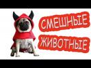 Смешные животные|Самые Смешные Видео приколы про животных|lustige videos|домашние кошки и собаки