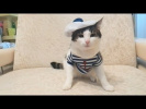 Приколы с котами   ТОПовая подборка! Русские приколы с кошками Funny Cats Compilation 2017