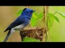 Птицы и феномен гнездостроения (рассказывает орнитолог Евгений Коблик)