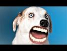 Приколы с животными Смешные животные Как говорят животные Funny Talking Pets