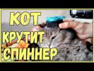 СМЕШНЫЕ КОТЫ И КОШКИ 2017 ПРИКОЛЫ С КОТАМИ И КОШКАМИ кот крутит спиннер хрюши против собак