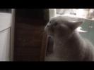 """""""Открой мне!!"""", говорящий кот Яков"""