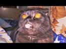 Приколы с Животными 2018 Апрель Приколы с Собаками и Кошками Смешные Животные LOL PETS