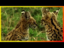 Приколы про животных Смешное и забавное видео Создай себе хорошее настроение
