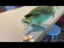 НУ ОЧЕНЬ СМЕШНЫЕ ЖИВОТНЫЕ Угарные приколы с животными Топ 2017 funny videos  with animals cute pets