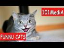 Постарайся не рассмеяться - Самые Смешные Коты 2017 | FUNNY CATS | Смешные Коты | смешные животные