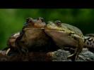 Моногамия у животных (рассказывает биолог Андрей Чебовский)