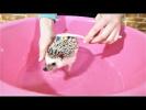 ПРИКОЛЫ 2017 Сентябрь #141 Самые Милые Видео с Животными Смешные Собаки и Кошки Шаверма из ежика Топ