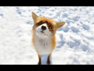 Приколы с Животными 2018 смешные лисички: милые и забавные