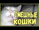 Смешные кошки приколы про кошек и котов 2017 #46 Лучшее Funny Cats