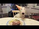 Приколы с животными Смешные собаки Приколы про собак Funny Dogs 2017 #2 Приколы с собаками 2017