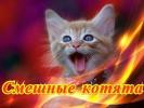 Смешные котята Позитив Создай себе хорошее настроение