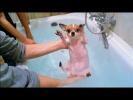 Реально смешные чихуахуа и мопсы Смешные и милые собаки Amazing pugs & chihuahua ylyl #1