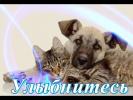 Прикольные кошки собаки Для детей Позитив Создай себе хорошее настроение