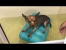 Забавные и Милые Животные Собаки Кошки Коровы Кони Щенки  Очень милое видео!