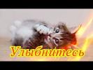 Смешное про животных видео Позитив Для детей Создай себе хорошее настроение