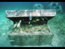 Сокровища затонувших кораблей. Проклятье Монтесумы