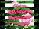 Слайд шоу из цветов