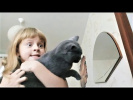 ПРИКОЛЫ 2017 Сентябрь #145 Самые Милые Видео с Животными Смешные Собаки и Кошки Про Котов и Собак