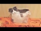 Смешные коты и Смешные собаки 2017 Подборка приколы с животными на 5 минут Funny pets