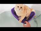 СМЕШНЫЕ ЖИВОТНЫЕ Приколы с животными Смешные Кошки и Собаки До слез Приколы про домашних животных