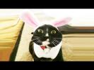 СМЕШНЫЕ КОТЫ И КОШКИ 2017 Подборка Животные Funny Animals Cute Pets
