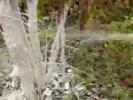 Побелка кустов аэрозольной побелкой Зеленая серия