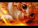 Прикольные животные видео Позитив Создай себе хорошее настроение