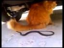 Змея и кошкин хвост