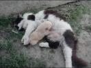 Кошка - мама усыновила щенка.