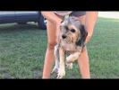 ПРИКОЛЫ 2017 Сентябрь #142 Самые Милые Видео с Животными Смешные Собаки и Кошки Лучшие приколы