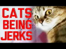 Cats Being Jerks Video Compilation || FailArmy